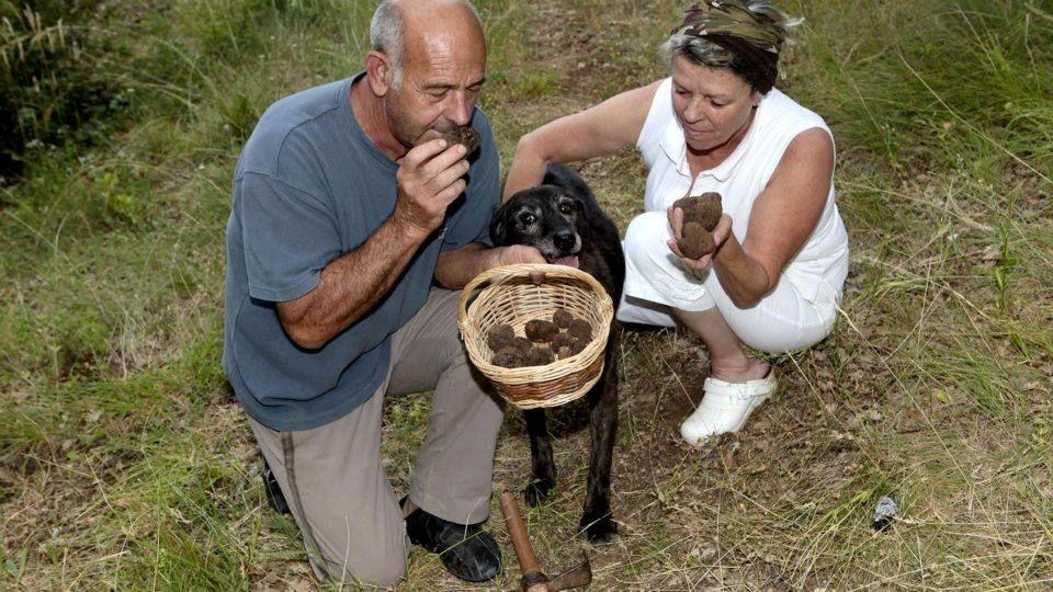 Recherche de la truffe dans le Haut Var - Verdon