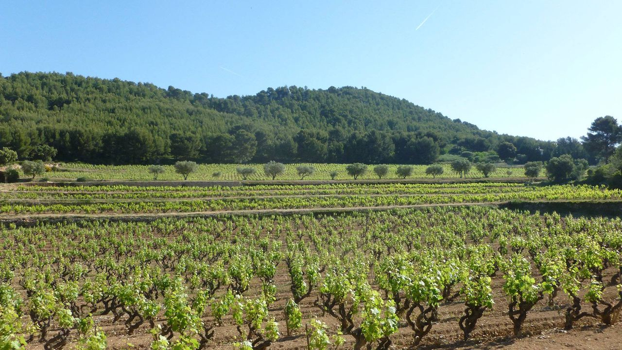 Tourisme en Provence : saint cyr sur mer
