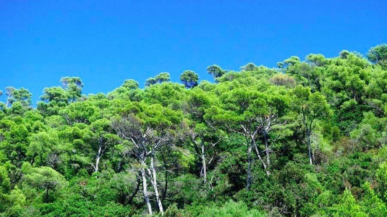 Port Cros - flore - végétation