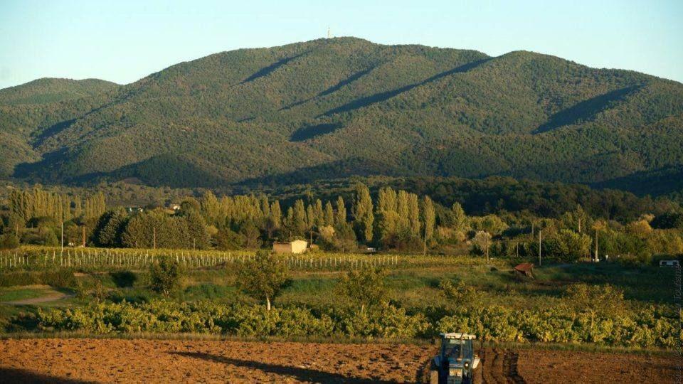 Les vignes du massif des Maures