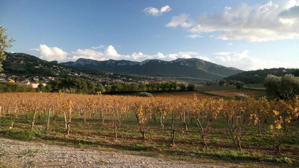 Vignes de Bandol - Massif de la Sainte Baume