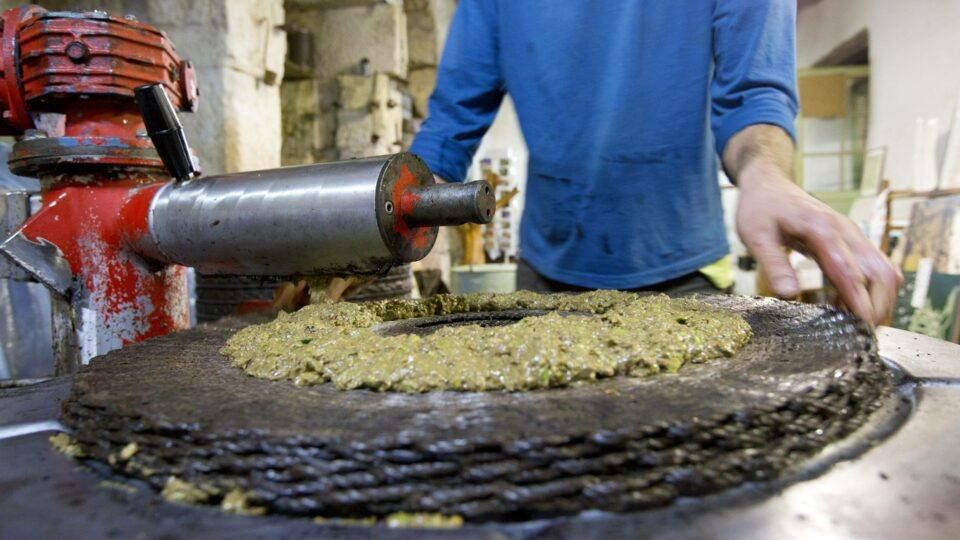 Étape importante du pressage des olives pour la confection de l'huile