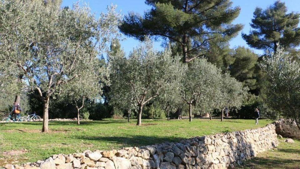 Venir en vélo ou à pied au conservatoire variétal de l'olivier, une belle idée de balade à la Valette-du-Var.