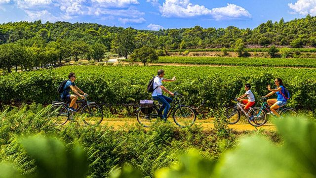 La vigne à vélo