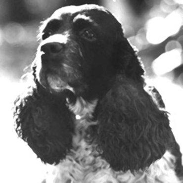 Het hondje van Nixon