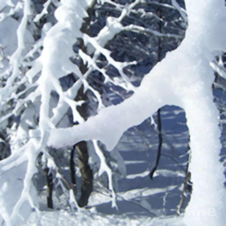 Winterstage begin januari in Zwijndrecht (België)
