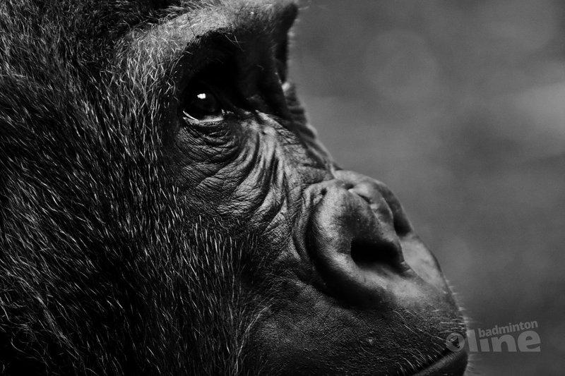 Pim Kwaks: Heeft Paul Kleijn toch gelijk? - Pixabay