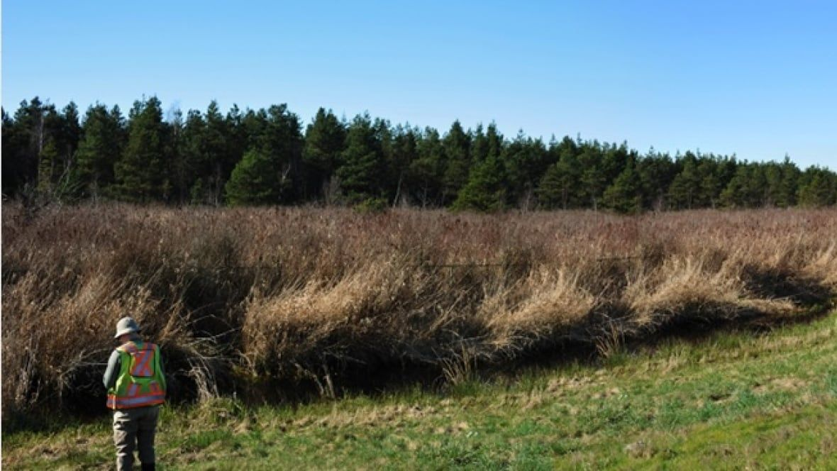 Leave Burns Bog alone, says conservation society