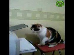 il-tecnico-della-stampante