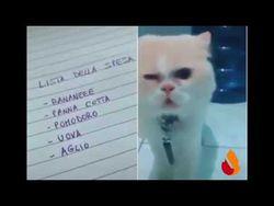 gatto-che-legge-la-lista-della-spesa