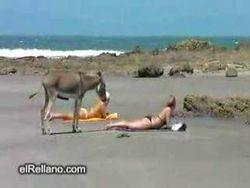 animale-da-spiaggia-affettuoso