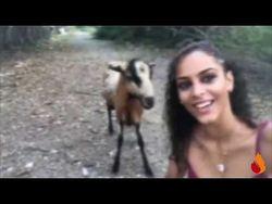 capre-capra-capre