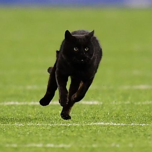 Episode 44: How many cats live in MetLife Stadium?
