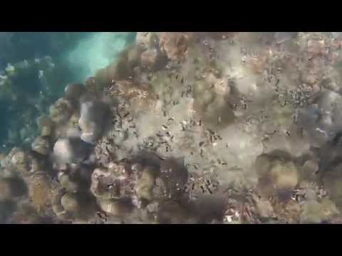 芭雅島 Pulau Payar - 浮潛 Snorkeling