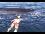 鯨魚保護協會解救被網子纏著的座頭鯨,之後鯨魚感謝的方式很不可思議