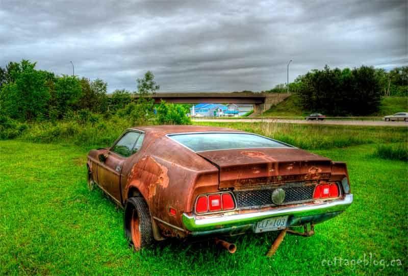 [Image: Mustang-800.jpg]