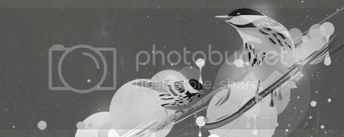 [Image: 8-10bnwbirdsFIN.png]