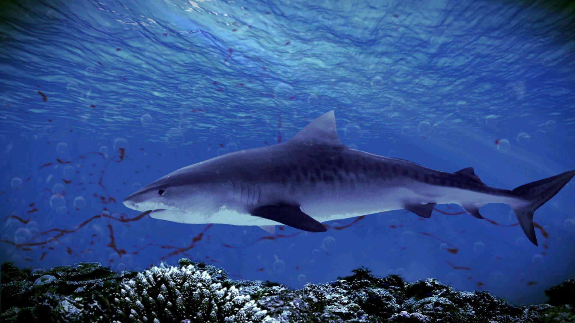 Oceaniczni Drapieżcy / Ocean Predators (2013) Blu-ray 1080p AVC DTS Multi BD25 Lektor PL