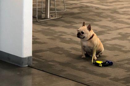 Слишком послушный пес расстроил пользователей