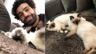 Mo Salah: Egypt footballer weighs in on cats and dogs rowの代表サムネイル