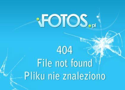 Gesiareczka / Gansemagd, Die (2009) DVDRip Lektor PL