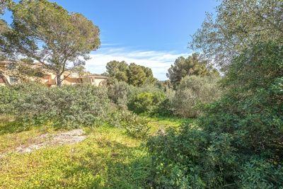 Ein nahezu ebenes Baugrundstuck in ruhiger Wohngegend und nahe der Marina sowie dem Ort Santa Ponsa gelegen