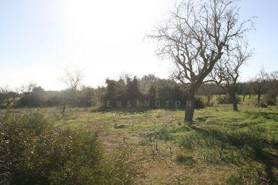 Das riesige und ruhig gelegene Baugrundstuck liegt nahe dem Ort Santanyi ( 3 km ) und auch nach Porto Colom ist es nicht weit