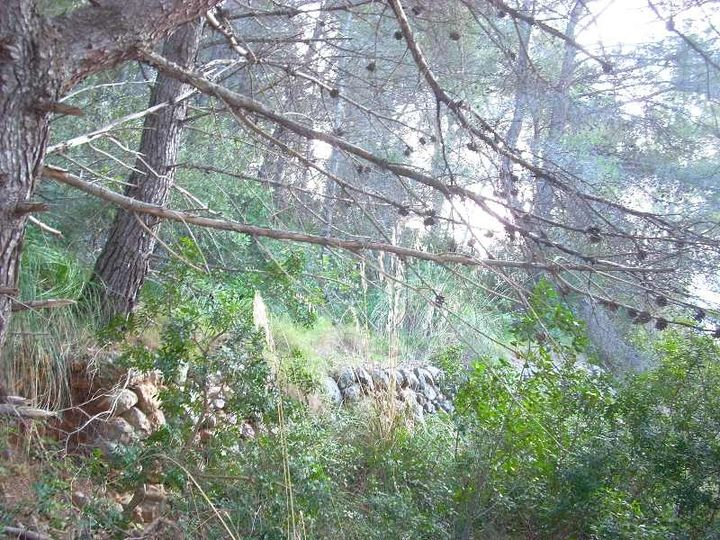 Building plot located in the hills that surround the Port of Soller with views to the mountains and to the Bay