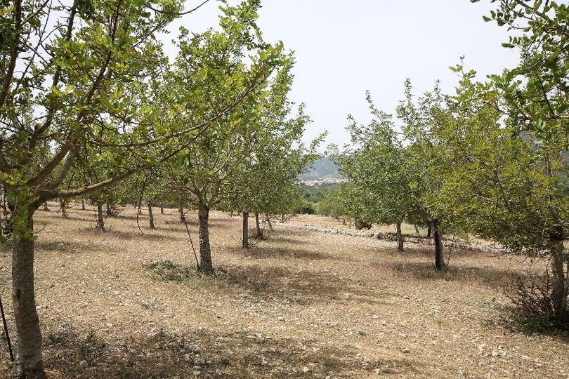 Located at the foot of the Alaro mountain, this big plot of land measures 29