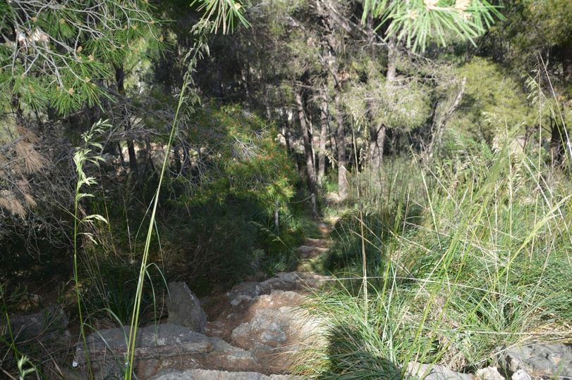 The approx. 1000 m² plot of land is located on a fantastic hillside in one of the most attractive residential areas in Mallorca