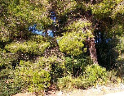 Canyamel ist einer der beliebtesten und gefragtesten Wohnorte an der Ostkuste Mallorcas