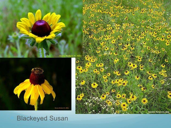 [Image: oklahoma-wild-flowers-10-728.jpg?cb=1275512493]