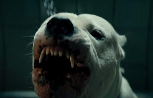 Dogman film complet