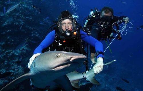 Traqueurs de requins film complet