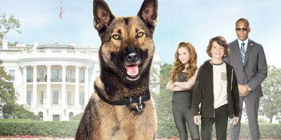 Max 2 : Héros de la Maison Blanche en streaming