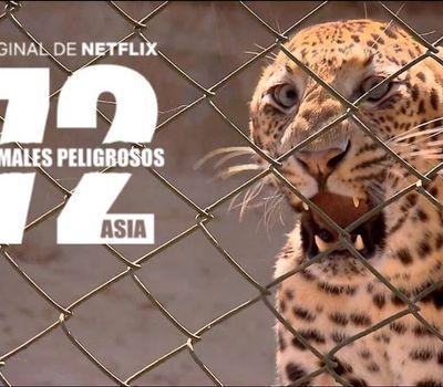 72 Dangerous Animals: Asia online