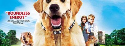 Diamond Dog: Chien Milliardaire online