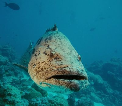Under the Sea 3D online