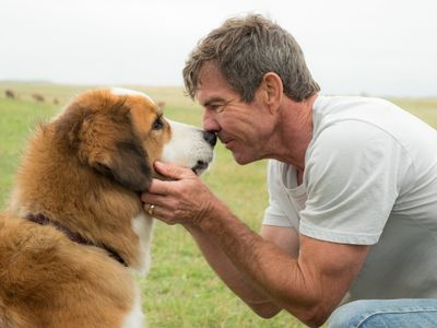 watch A Dog's Purpose streaming