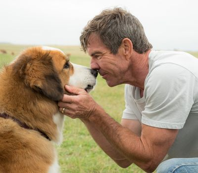 A Dog's Purpose online