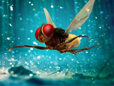 watch Eega streaming