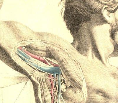 Anatomy 2 online
