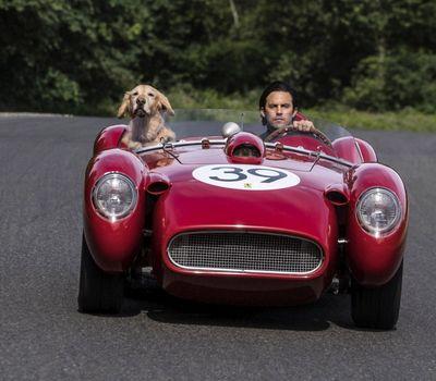 The Art of Racing in the Rain online