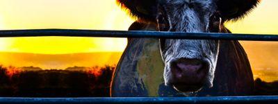Cowspiracy: Le Secret de la durabilité online