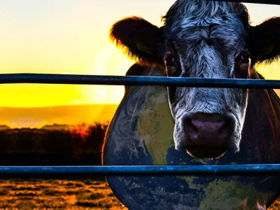 watch Cowspiracy: The Sustainability Secret streaming