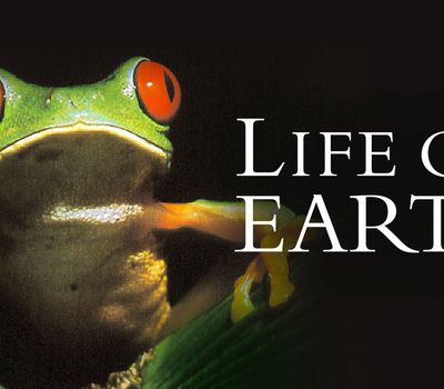 Life on Earth online