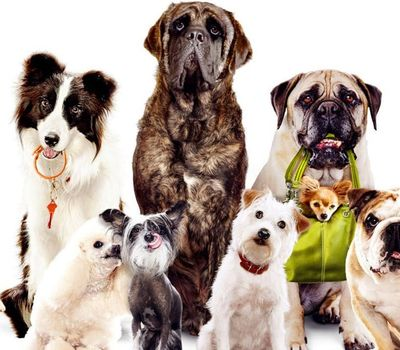 Hotel for Dogs online