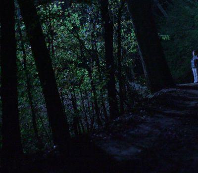 Below the Trees online