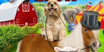 A Dog and Pony Show en streaming