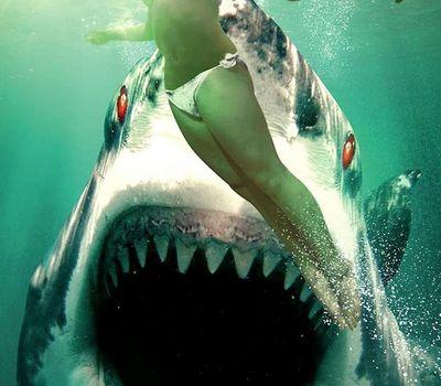 Ghost Shark online